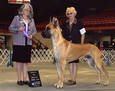 AKC / UKC CH. Lagarada's Turn Back Time