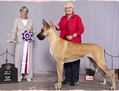 BIS CFC ELITE CH / BIS RBIS BISS (CKC) GRAND CH EXCELLENT / Lagarada's Magical Memories, CGN